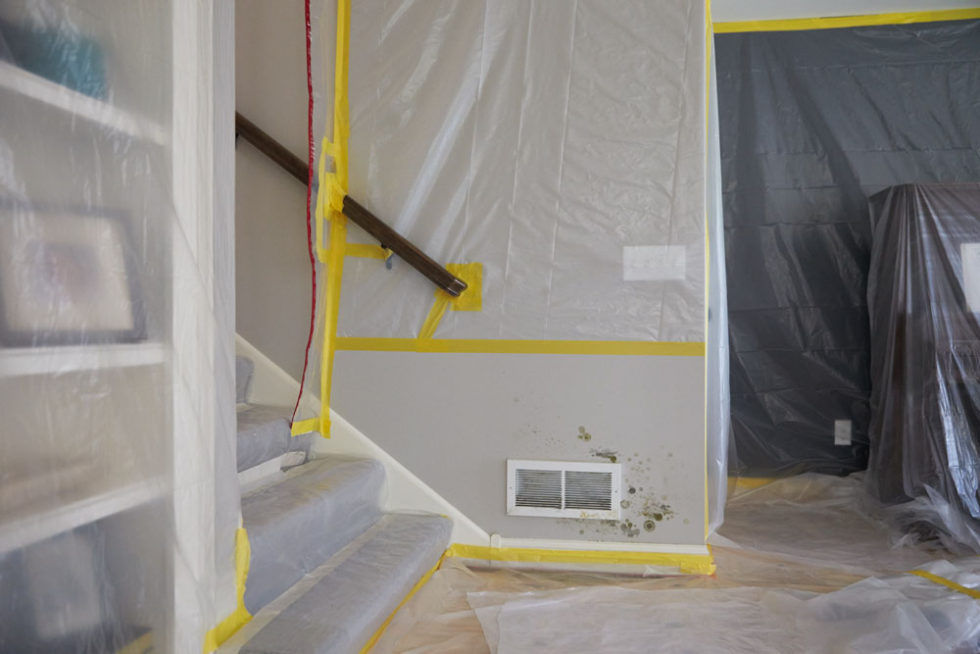 emergency mold remediation near me