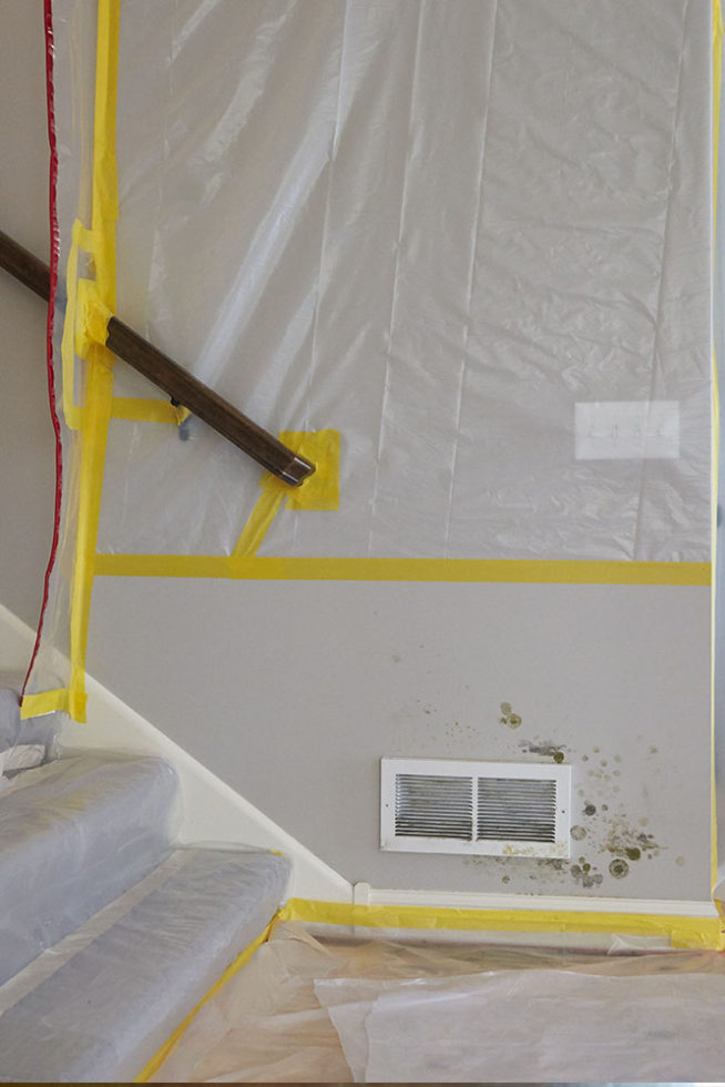 mold remediation experts, mold remediation